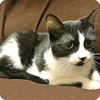 Adopt A Pet :: Relli - Rochester, NY