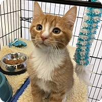 Adopt A Pet :: Rusty - San Jose, CA