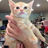 Adopt A Pet :: Zazu - Byron Center, MI