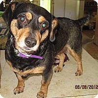 Adopt A Pet :: Gabby - Bakersville, NC