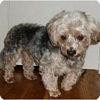 Adopt A Pet :: Douglas - Mooy, AL