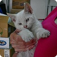 Adopt A Pet :: Twinkie n Twitter - Brea, CA