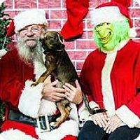 Adopt A Pet :: Shimmer - Austin, TX