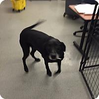 Adopt A Pet :: Butch - Wahoo, NE