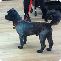 Adopt A Pet :: Roscoe - Bridgewater, NJ