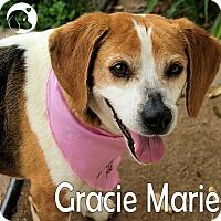 Adopt A Pet :: Gracie Marie - Novi, MI