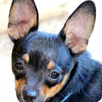 Adopt A Pet :: Ronald - Kempner, TX
