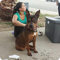 Adopt A Pet :: Brooklyn - Sacramento, CA