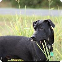Adopt A Pet :: Tyler - Albemarle, NC