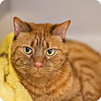 Adopt A Pet :: Vaco - Lincoln, NE