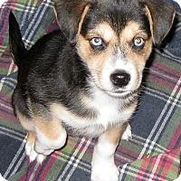 Adopt A Pet :: Lexi - Schaumburg, IL