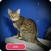 Adopt A Pet :: Fox - Fairborn, OH