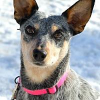 Adopt A Pet :: Silver - Delano, MN