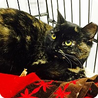 Adopt A Pet :: Luisa - Webster, MA