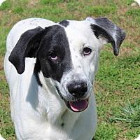 Adopt A Pet :: Tash - Harmony, Glocester, RI