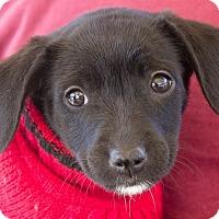 Adopt A Pet :: Kendra - Marina del Rey, CA