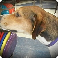 Adopt A Pet :: Mia (formerly Mallory) - Davenport, IA