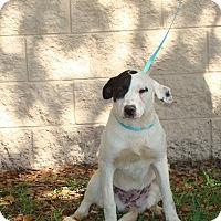 Adopt A Pet :: Ava - Oviedo, FL