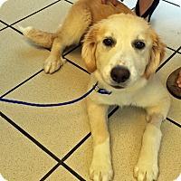 Adopt A Pet :: Taffy - BIRMINGHAM, AL