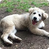 Adopt A Pet :: Winter - Kyle, TX
