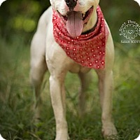 Adopt A Pet :: Jackson - ADOPTED! - Zanesville, OH