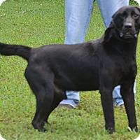 Adopt A Pet :: Cooper - Lebanon, MO