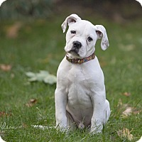 Adopt A Pet :: DeWalt (Dewey) - Drumbo, ON
