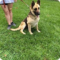 Adopt A Pet :: Bella - Mechanicsburg, PA