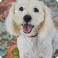 Adopt A Pet :: Harrison - Staunton, VA