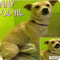 Adopt A Pet :: PENNY - San Antonio, TX