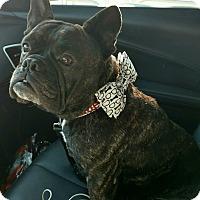 Adopt A Pet :: Frankie - Houston, TX
