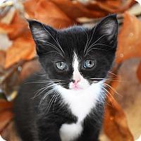 Adopt A Pet :: Davey-PENDING - Bristol, CT