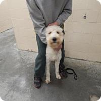 Adopt A Pet :: Zander - Pikeville, KY
