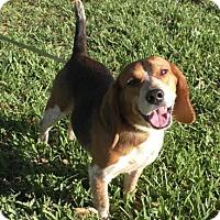 Adopt A Pet :: Wallace - Tampa, FL