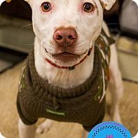 Adopt A Pet :: Sirius - Staten Island, NY