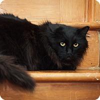 Adopt A Pet :: GoldenEye - Brimfield, MA