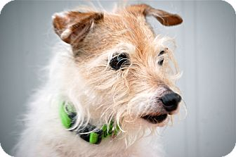 Jack Russell Terrier Mix Dog for adoption in Meridian, Idaho - Sugarloaf