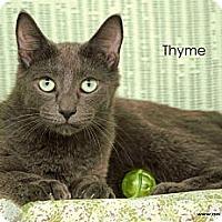 Adopt A Pet :: Thyme - St Louis, MO