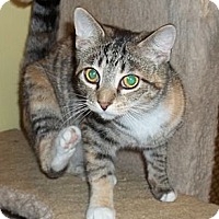 Adopt A Pet :: Kikwi - Acme, PA