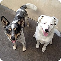 Adopt A Pet :: Lucky & Patches - Scottsdale, AZ