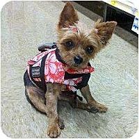 Adopt A Pet :: Dorothy - Miami, FL
