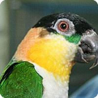 Adopt A Pet :: Remi - Wantage, NJ