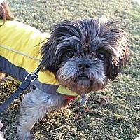 Adopt A Pet :: Lantana - Marietta, GA