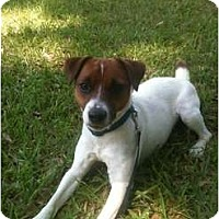 Adopt A Pet :: Bob in Louisiana - Houston, TX