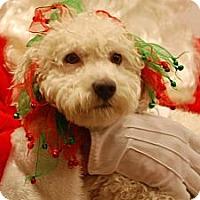 Adopt A Pet :: Zoey - Ogden, UT