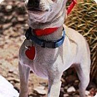 Adopt A Pet :: Roscoe - Gilbert, AZ