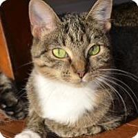 Adopt A Pet :: Hope - Xenia, OH