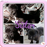 Adopt A Pet :: Sister - Bakersfield, CA