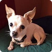 Adopt A Pet :: Beni - San Diego, CA