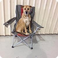 Adopt A Pet :: Bobbie - Humble, TX